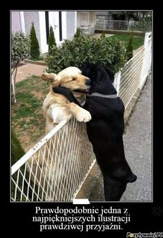 Animals And Pets, Funny Animals, Cute Animals, I Love Dogs, Puppy Love, Pet Dogs, Dog Cat, Bestest Friend, Life Is Strange
