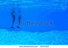 Animals - Couple of dolphins in the blue water. by eZeePics Studio, via Shutterstock