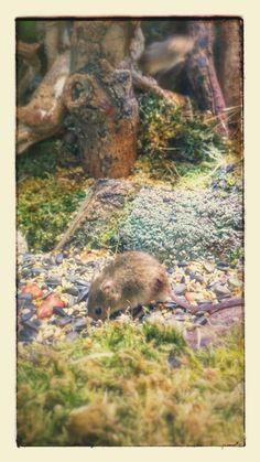 Une souris.
