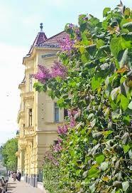 Image result for springtime Vienna