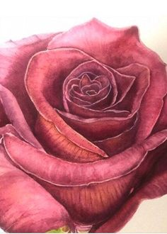 Excited to share this item from my shop: Burgundy Rose Watercolor Rose, Watercolour Painting, Shades Of Burgundy, Paper Dimensions, Marsala, Your Paintings, Beautiful Roses, Dahlia, Art For Sale