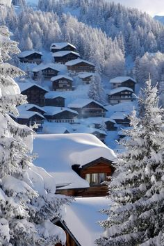 "tulipnight: "" Bettmeralp by ISO 69 """