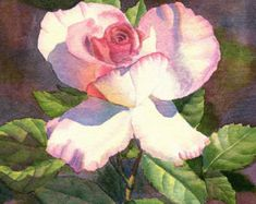 Yellow Rose art watercolor painting print by Cathy Hillegas