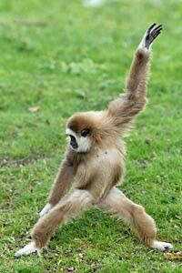 Un singe qui danse!!!
