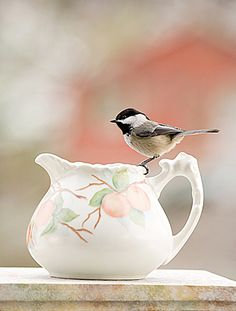"photograph: ""Peachy"".. Black-capped Chickadee hand-painted pitcher © 2008....by Betty Udesen"