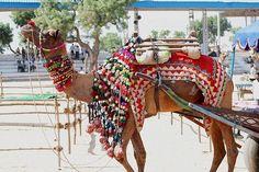Pushkar Camel Fair in November