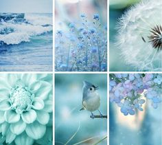 ♥ Color Combos, Color Schemes, Collages, Color Collage, Beautiful Collage, Colour Board, Color Stories, Color Of Life, Blue Aesthetic