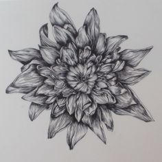 Permanent marker onto acetate. Considering representations of beauty and death (corrosion etc) #flower #acetate #drawing