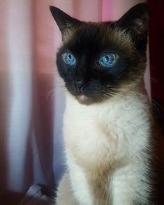 We Want To See Photos Of Your Gorgeous Cats - 18+ Cute Cats Who are perfect - #cat #kittens #pets #animals #cute #funny #paw #best #memes #photo #catfood #kitty