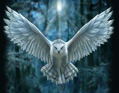 Snowy Owl YULE Card Anne Stokes Owl in flight Pentacle Pagan Solstice Greeting Card Beautiful Owl, Beautiful Artwork, Owl Bird, Pet Birds, Buho Tattoo, Anne Stokes, Snowy Owl, Bird Pictures, Cute Owl