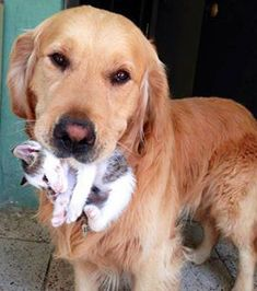 Voici ce que signifie réellement s'entendre comme chien et chat ! Fun Facts About Animals, Animal Facts, Cute Funny Animals, Cute Cats, Baby Dogs, Pet Dogs, Unusual Animal Friends, Animals And Pets, Baby Animals