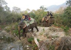 http://365hops.tumblr.com/post/116097122957/tips-for-jeep-safari-in-jim-corbett-national-park >>> Travel tips for Jeep Safari in Jim Corbett National Park  #junglesafari, #jeepsafari, #JimCorbett, #Uttarakhand, #India, #365Hops #NationalPark
