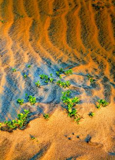 ✮ Dunes on Cape Hatteras National Seashore in the Outer Banks of North Carolina