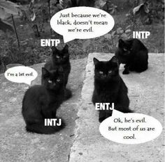 Rationalists: the black cats of the MBTI world (black cats aren't evil)