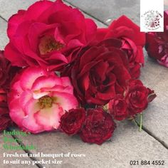 Fresh cut and bouquet of roses at LRW this Valentines Day. Plastic Lumber, Chalkboard Writing, Christmas Rose, Rose Pictures, Flower Food, Farm Stand, Wedding 2017, Rose Bouquet, Hedges