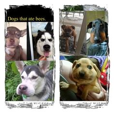 Dogs that ate bees