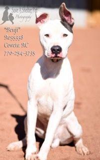 Dogs For Adoption Euthanization Rescue Sponsor Dog Adoption Petsmart Dog Cute Animal Photos