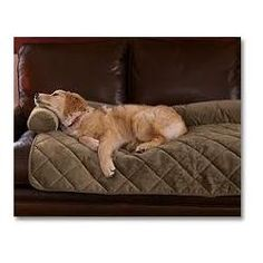 Invest in a Dog Couch Cover