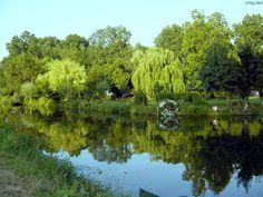 Fond Décran Nature Saules Du Marais Poitevin