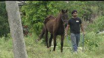 7 horses found dead, 11 others malnourished.