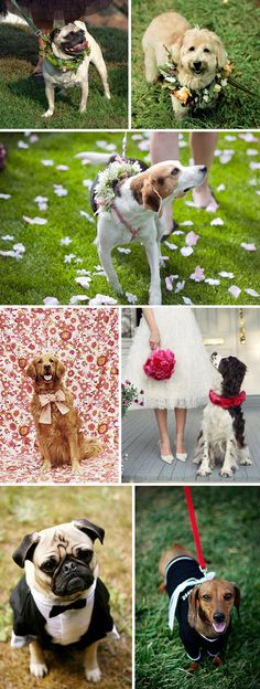 Dog ring bearer. I love the idea of using your pup at your wedding!