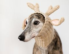 Let your dog bring the LOLs with this reindeer beanie.