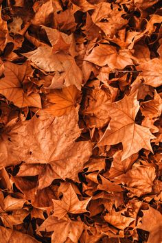 50+ Free Fall Wallpaper & Autumn Wallpaper Options For Your iPhone