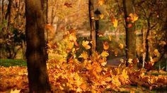 alfombra de hojas otoño wallpapers - Buscar con Google