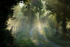 Image detail for -Sunrays penetrating trees in forest