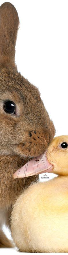 Bunny & Duck Best Friends! ❤