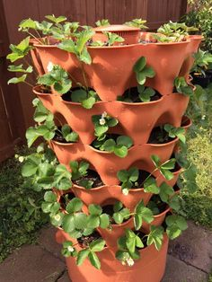 Garden Tower 2 planted with strawberries  Vermaculture composting in center of planter
