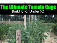 """Growing tomatoes is serious business for many backyard gardeners. Everyone wants to get the most out of the garden. Tomatoes have long been grown on some type of """"trellis system"""" for them to climb up on. At the Old World Garden Farms blog they show and discuss their """"Stake-A-Cage"""" tomato cage. Simple, smart and does …"""