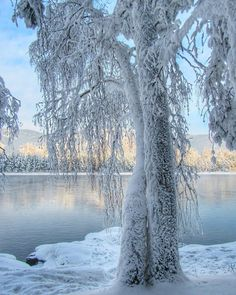 Image shared by granmaster_by. Find images and videos on We Heart It - the app to get lost in what you love. Winter Szenen, I Love Winter, Winter Magic, Winter Wonderland Christmas, Winter Christmas, Christmas Tree, Winter Photography, Nature Photography, Travel Photography