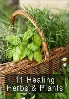 11 Healing Herbs and Plants: Grow these and you will grow your own first aid kit.