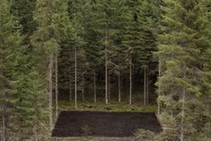 Antti Laitinen, 'Forest Square II,' 2013, Galerie Anhava