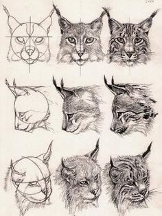 Draw Cats lynx head - middle right, maybe if it was looking up? Cat Drawing, Drawing Sketches, Painting & Drawing, Drawing Ideas, Pencil Drawings Of Animals, Animal Sketches, Wildlife Art, Drawing Techniques, Cat Art