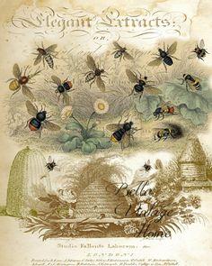 Botanical Bee Print, Pillow, Note Cards, Tea Towel – BELLAVINTAGEHOME