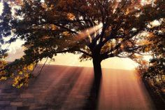 Intr-o dimineata de noiembrie, New York-ul s-a trezit invaluit in ceata, iar raul Hudson si copacii ce il marginesc au devenit imediat un rai al fotografiilor. Heaven Is Real, Riverside Park, Going Natural, Nature Scenes, Yorkie, Wonders Of The World, New York City, Beautiful Places, Scenery