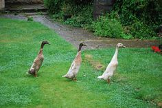 Are Your Ducks In a Row? Creating A Business Plan, Ducks, The Row