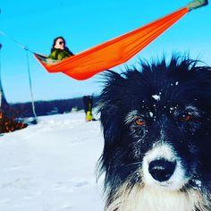 The team wouldn't be the team without our Aussie #adventure#adventureteam6#travel#hiking#backpacking#wanderlust#paddle#bike#hammock#m22#kayak#travel#michigan#northernmichigan#mi#hammocklife by @adventureteam6