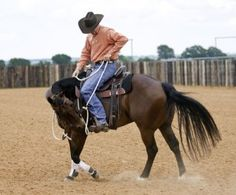 Teach Your Horse to Bend at the Walk - Clinton Anderson