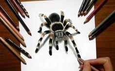 3D Drawing Tarantula Spider in Colored Pencil   Jasmina Susak