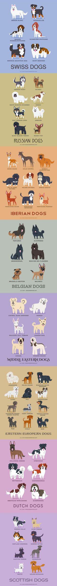 Cachorros do mundo: