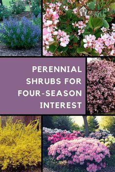 Flower Landscape, Garden Landscaping, Garden Planning, Perennial Garden Plans, Landscape Design, Landscaping Tips, Perennials, Plants, Perennial Shrubs