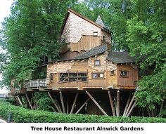 Do we get to eat in the tree house, Tess?