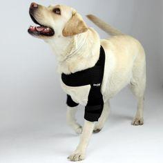 Dog Pressure Sores Pictures