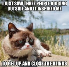 "If you love Grumpy cat Then you are at right place , Here's huge collection of ""Top 22 Grumpy Cat Memes Valentines Day"" that are so funny and humor.These ""Top 22 Grumpy Cat Memes Valentines Day"" are able to make you laugh and funny for whole day. Grumpy Cat Quotes, Funny Grumpy Cat Memes, Funny Animal Jokes, Cat Jokes, Cute Funny Animals, Funny Animal Pictures, Animal Memes, Funny Cats, Grumpy Kitty"