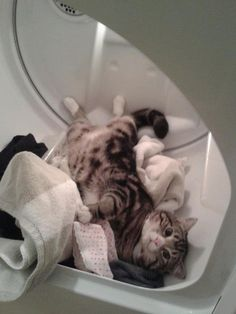 big helper on laundry day cat