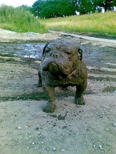 Caretrasero - Ya se bañó