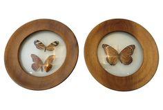 Framed Butterflies, Pair